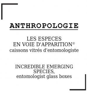Anthropologie Elia Pagliarino