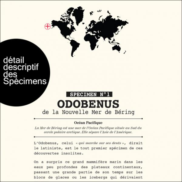 Descriptif des specimens 2