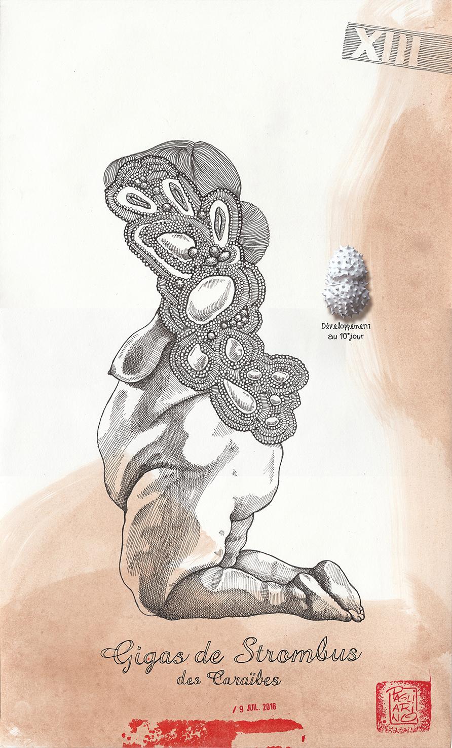 Specimen 13, MER DES CARAIBES, by elia pagliarino